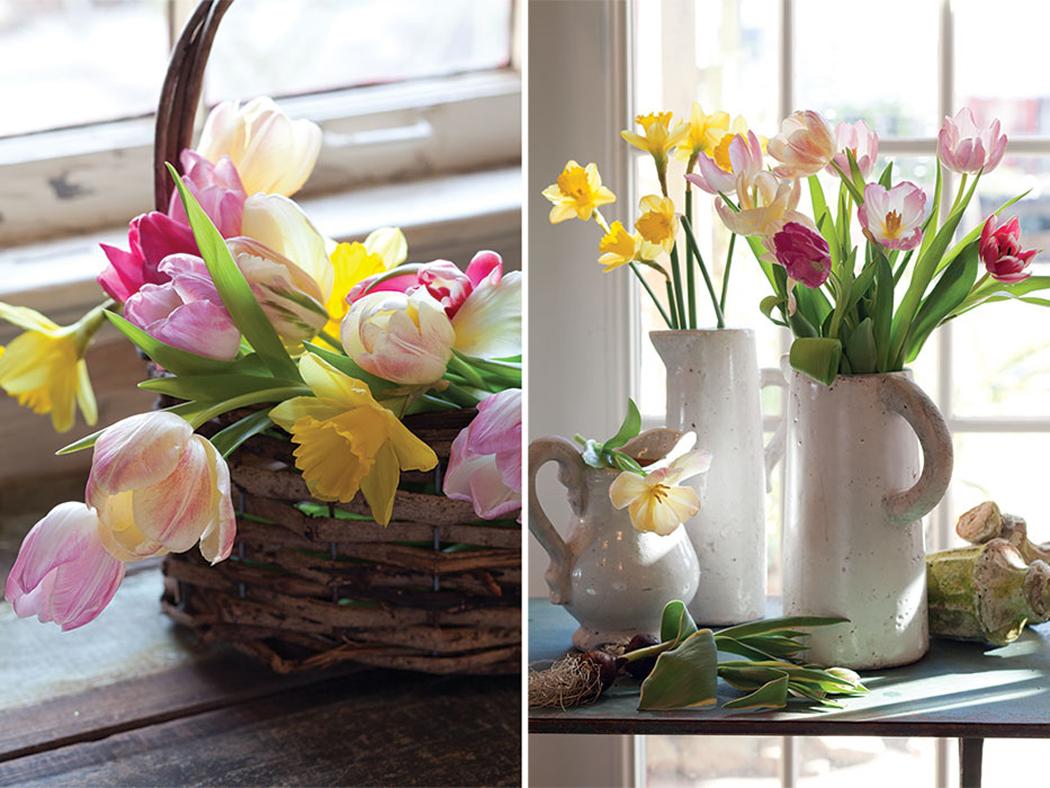 Potting Bulbs for Spring