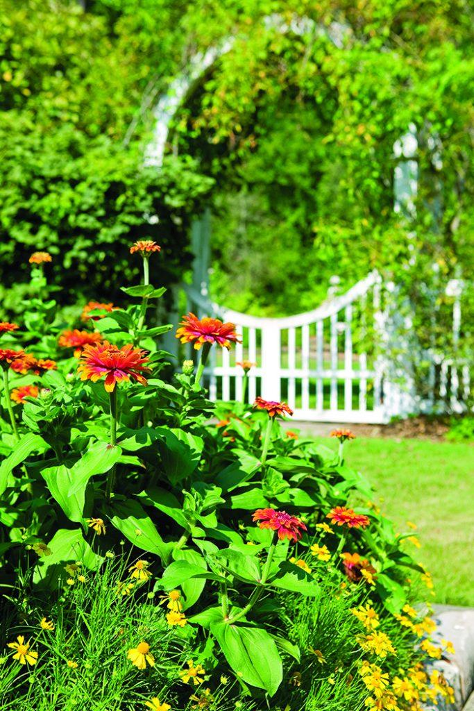 Garden_accent3