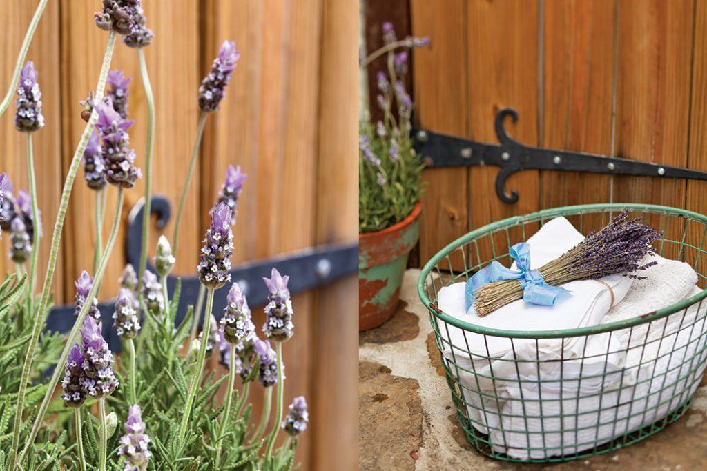 creekside lavender1