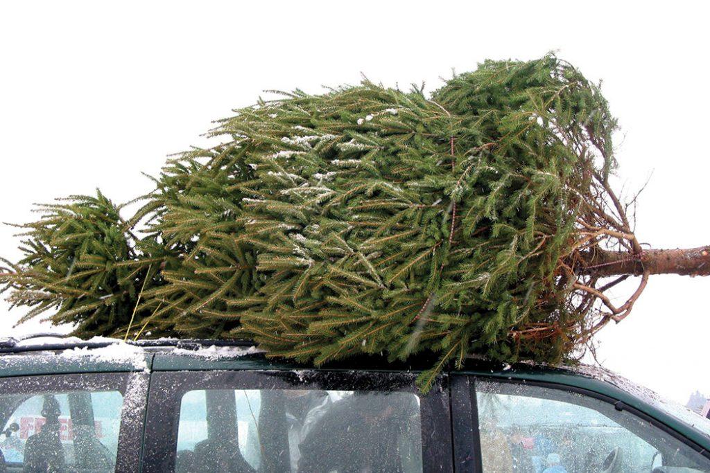 christmas-tree-farm-cartop-tree