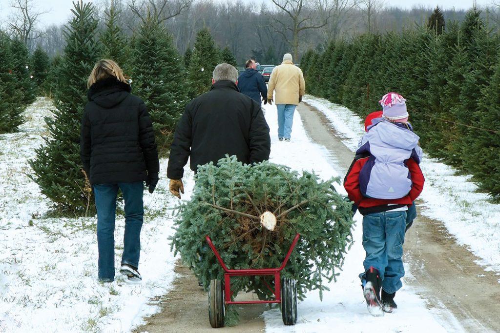 christmas-tree-farm-family