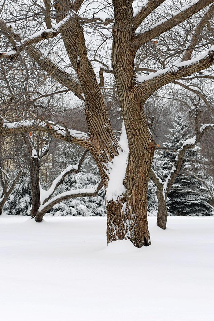 Snowy Textured Tree