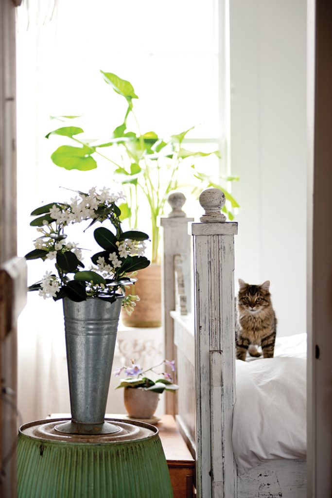 Unexpected-House-Plant-cat