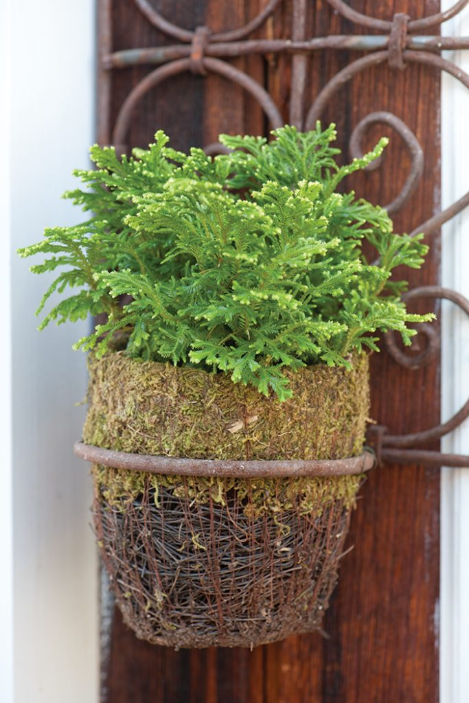 Unexpected-House-Plant-greenery