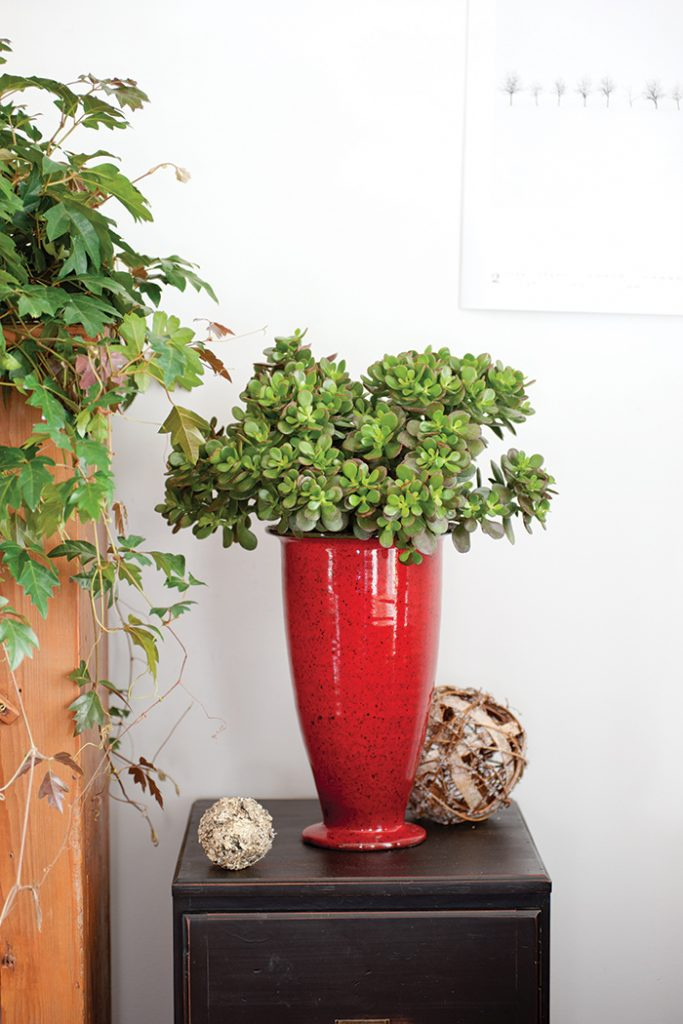 Unexpected-House-Plant-red-vase