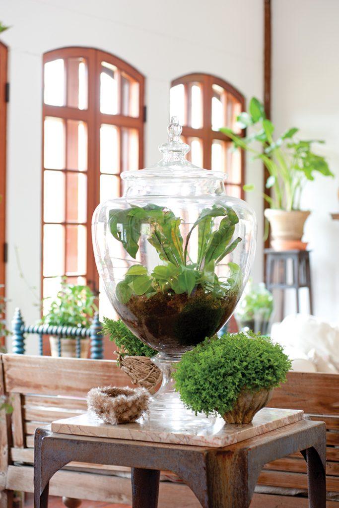 Unexpected-House-Plant-terrarium