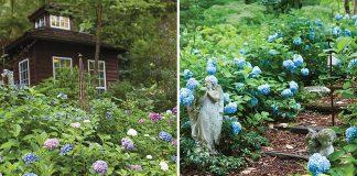 Beautiful Hydrangea Garden
