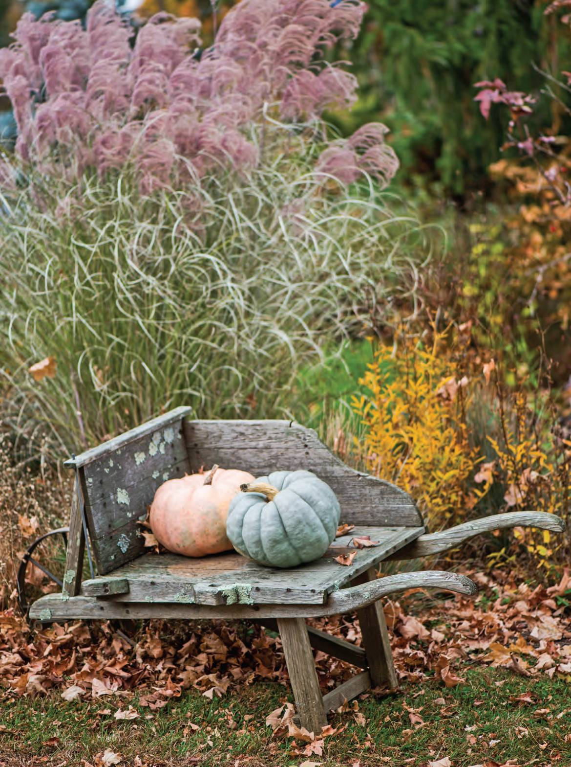 How to Create a Fall Garden The Cottage Journal