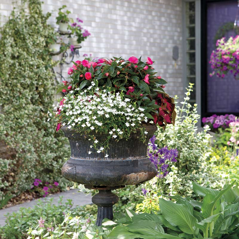A Cottage Garden to Obsess Over