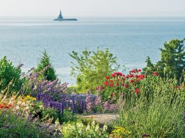 Summer Blooms with a View