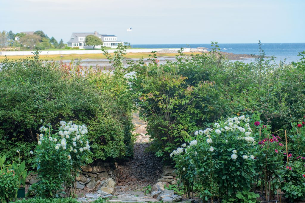An Oceanside Garden Decked with Dahlias