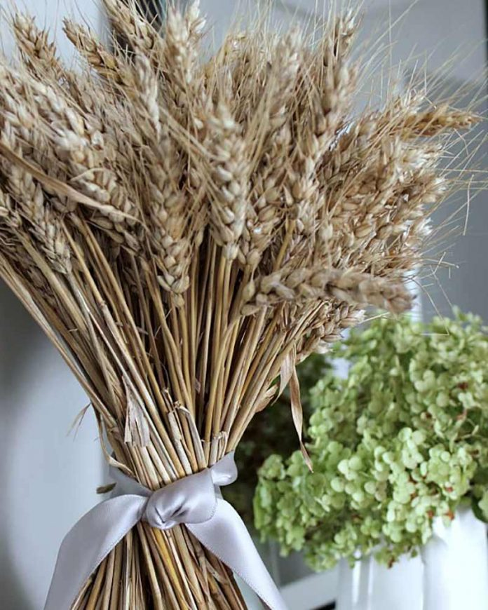 autumn decor - wheat sheaves