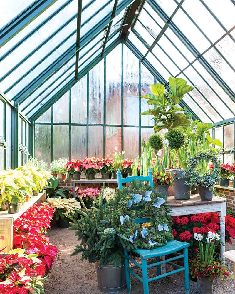 Shoppe Birmingham greenhouse