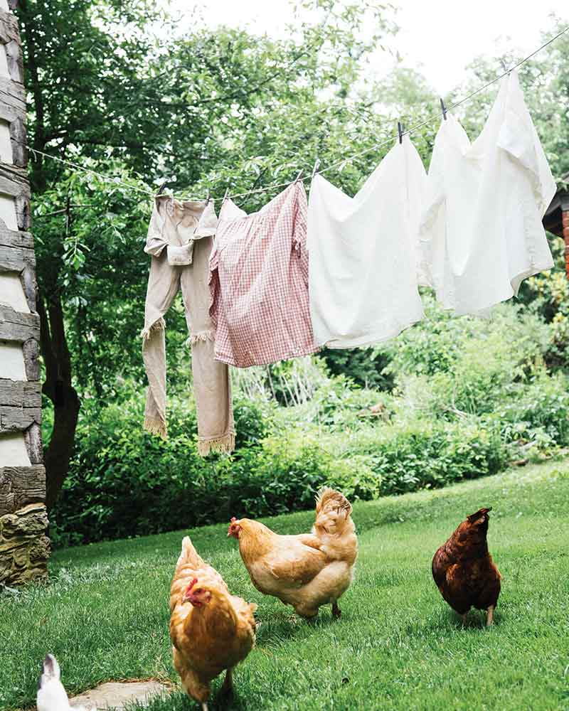 chickens and clothes line